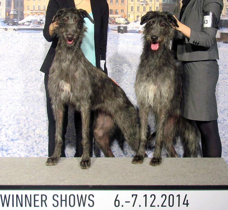 WINNER-2014-2